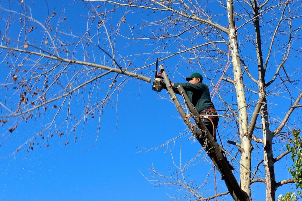 Contact Us-Kendall West FL Tree Trimming and Stump Grinding Services-We Offer Tree Trimming Services, Tree Removal, Tree Pruning, Tree Cutting, Residential and Commercial Tree Trimming Services, Storm Damage, Emergency Tree Removal, Land Clearing, Tree Companies, Tree Care Service, Stump Grinding, and we're the Best Tree Trimming Company Near You Guaranteed!