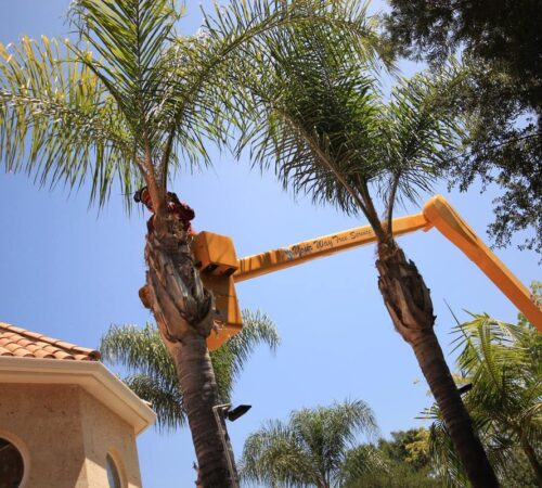 Palm Tree Trimming-Kendall West FL Tree Trimming and Stump Grinding Services-We Offer Tree Trimming Services, Tree Removal, Tree Pruning, Tree Cutting, Residential and Commercial Tree Trimming Services, Storm Damage, Emergency Tree Removal, Land Clearing, Tree Companies, Tree Care Service, Stump Grinding, and we're the Best Tree Trimming Company Near You Guaranteed!