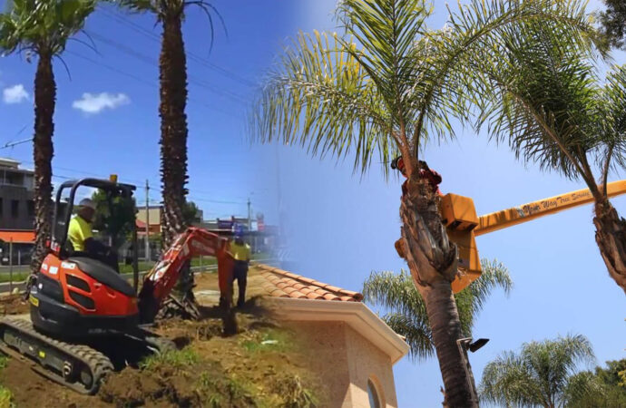 Palm tree trimming & palm tree removal-Kendall West FL Tree Trimming and Stump Grinding Services-We Offer Tree Trimming Services, Tree Removal, Tree Pruning, Tree Cutting, Residential and Commercial Tree Trimming Services, Storm Damage, Emergency Tree Removal, Land Clearing, Tree Companies, Tree Care Service, Stump Grinding, and we're the Best Tree Trimming Company Near You Guaranteed!