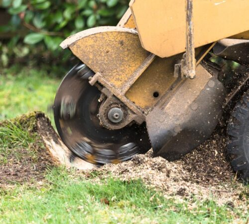 Stump Grinding-Kendall West FL Tree Trimming and Stump Grinding Services-We Offer Tree Trimming Services, Tree Removal, Tree Pruning, Tree Cutting, Residential and Commercial Tree Trimming Services, Storm Damage, Emergency Tree Removal, Land Clearing, Tree Companies, Tree Care Service, Stump Grinding, and we're the Best Tree Trimming Company Near You Guaranteed!