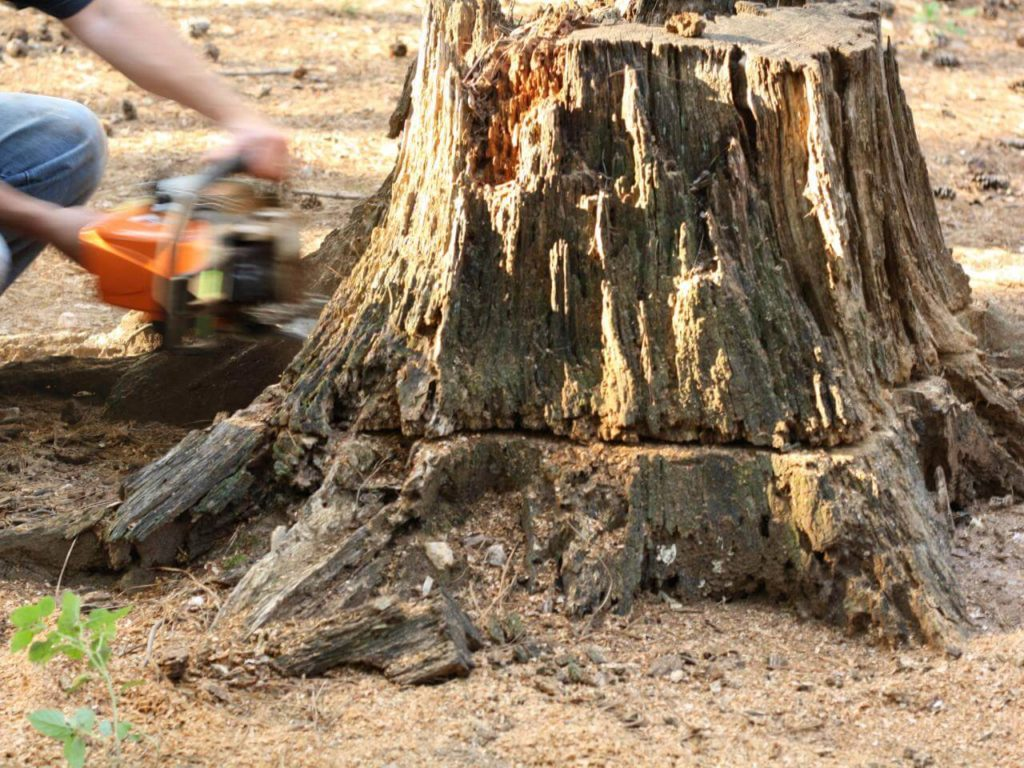 Stump Removal-Kendall West FL Tree Trimming and Stump Grinding Services-We Offer Tree Trimming Services, Tree Removal, Tree Pruning, Tree Cutting, Residential and Commercial Tree Trimming Services, Storm Damage, Emergency Tree Removal, Land Clearing, Tree Companies, Tree Care Service, Stump Grinding, and we're the Best Tree Trimming Company Near You Guaranteed!