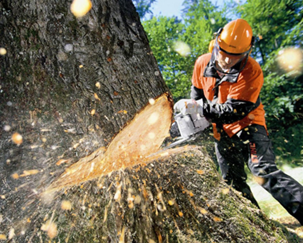 Tree Cutting-Kendall West FL Tree Trimming and Stump Grinding Services-We Offer Tree Trimming Services, Tree Removal, Tree Pruning, Tree Cutting, Residential and Commercial Tree Trimming Services, Storm Damage, Emergency Tree Removal, Land Clearing, Tree Companies, Tree Care Service, Stump Grinding, and we're the Best Tree Trimming Company Near You Guaranteed!