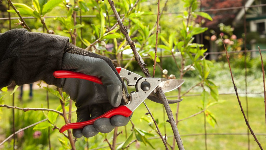 Tree Pruning-Kendall West FL Tree Trimming and Stump Grinding Services-We Offer Tree Trimming Services, Tree Removal, Tree Pruning, Tree Cutting, Residential and Commercial Tree Trimming Services, Storm Damage, Emergency Tree Removal, Land Clearing, Tree Companies, Tree Care Service, Stump Grinding, and we're the Best Tree Trimming Company Near You Guaranteed!