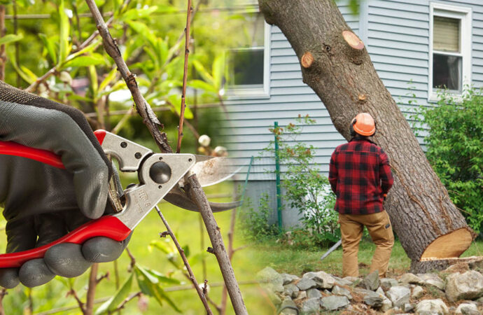 Tree pruning & tree removal-Kendall West FL Tree Trimming and Stump Grinding Services-We Offer Tree Trimming Services, Tree Removal, Tree Pruning, Tree Cutting, Residential and Commercial Tree Trimming Services, Storm Damage, Emergency Tree Removal, Land Clearing, Tree Companies, Tree Care Service, Stump Grinding, and we're the Best Tree Trimming Company Near You Guaranteed!
